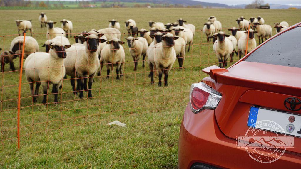 Eine Herde Schafe begutachtet unseren orangefarbenen Toyota GT86.